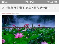 滕州燕翔摄影班24幅作品入展全国荷花摄影大展!