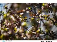 今天春分随拍分享