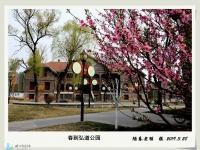春到弘道公园