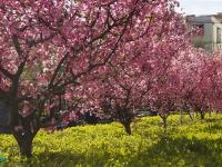 最是一年春好处,绝胜烟柳满滕州