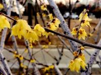 真的是春暖花开了